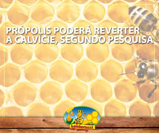 blog_propolis