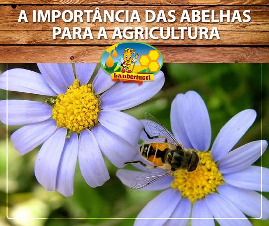 importancia-das-abelhas