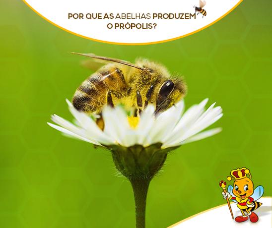 por-que-as-abelhas-produzem-o-propolis