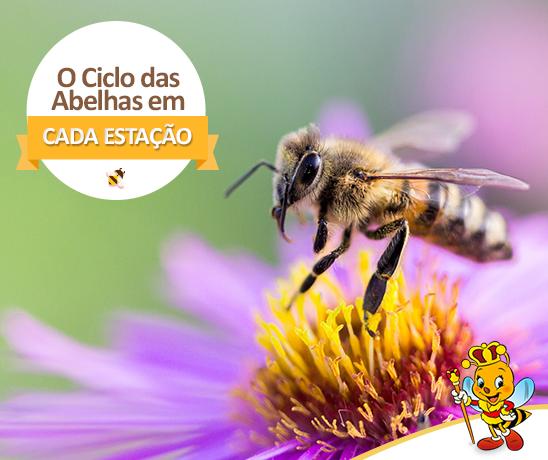 o-ciclo-das-abelhas-em-cada-estacao