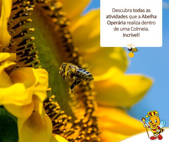 descbra-todas-as-atividades-que-a-abelha-operaria-realiza-dentro-de-uma-colmeia