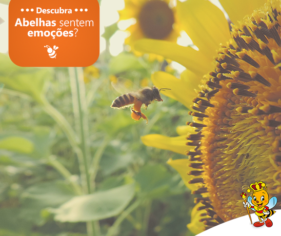 as-abelhas-sentem-emocoes