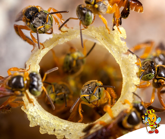 extincao-das-abelhas-e-o-fim-da-vida-na-terra