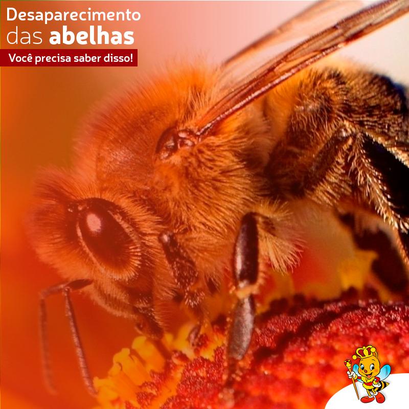 desaparecimento de abelhas